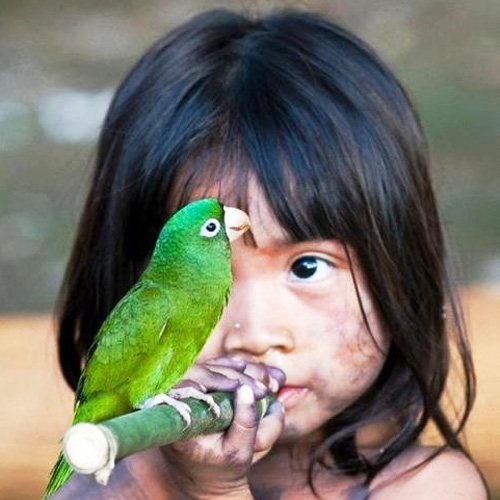 girl looks at parrot on stick she is carrying